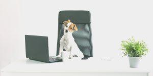 Quais são as principais estratégias do marketing digital de veterinárias e petshops?